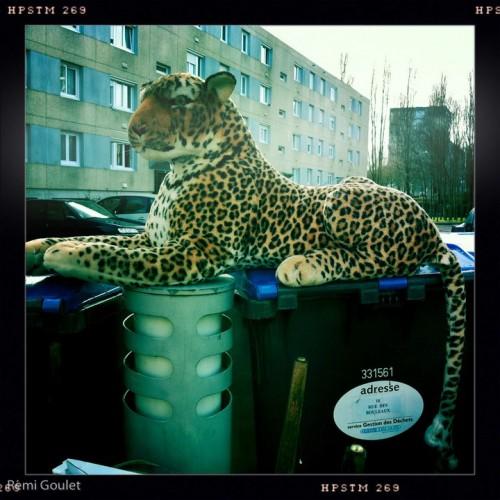 Leopard mais Saint-Nazaire
